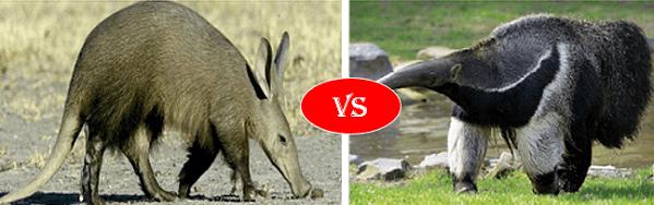 Aardvark vs Anteater
