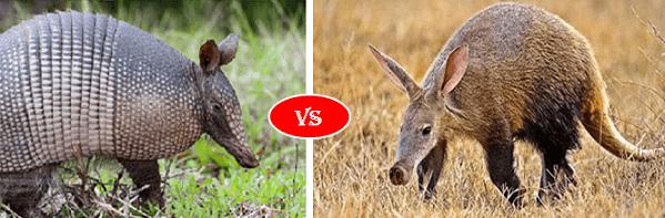 Aardvark vs Armadillo