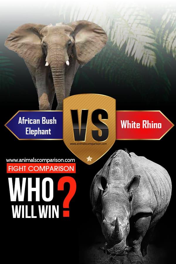 African Bush Elephant vs. White Rhino
