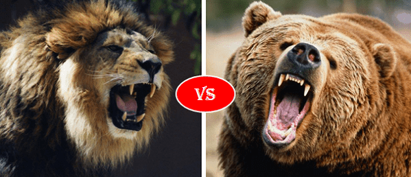 African lion vs Grizzly bear