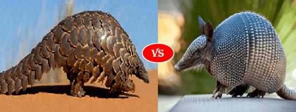 Armadillo vs Pangolin