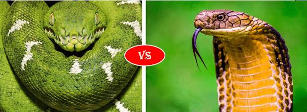 Green anaconda vs king cobra