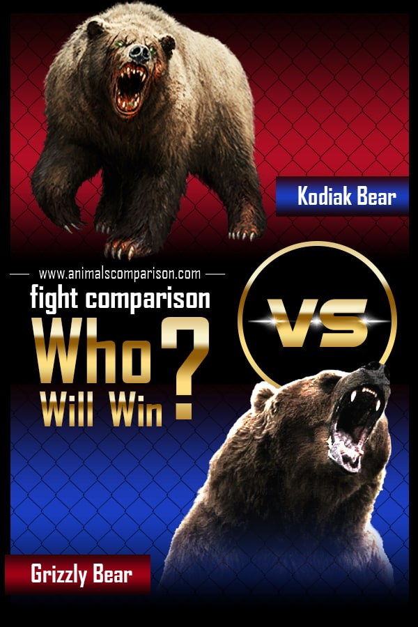 Grizzly Bear vs Kodiak Bear