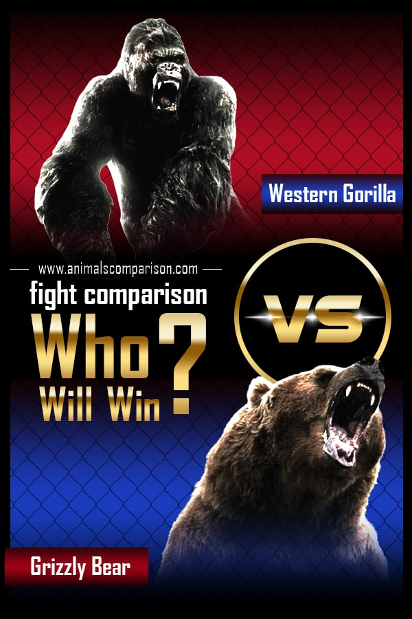 Grizzly Bear vs. Western Gorilla