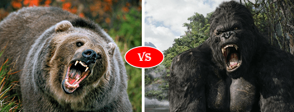 Grizzly bear vs Western Gorilla