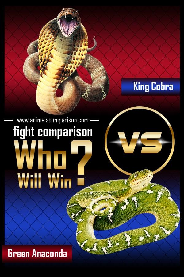 King Cobra vs Green Anaconda
