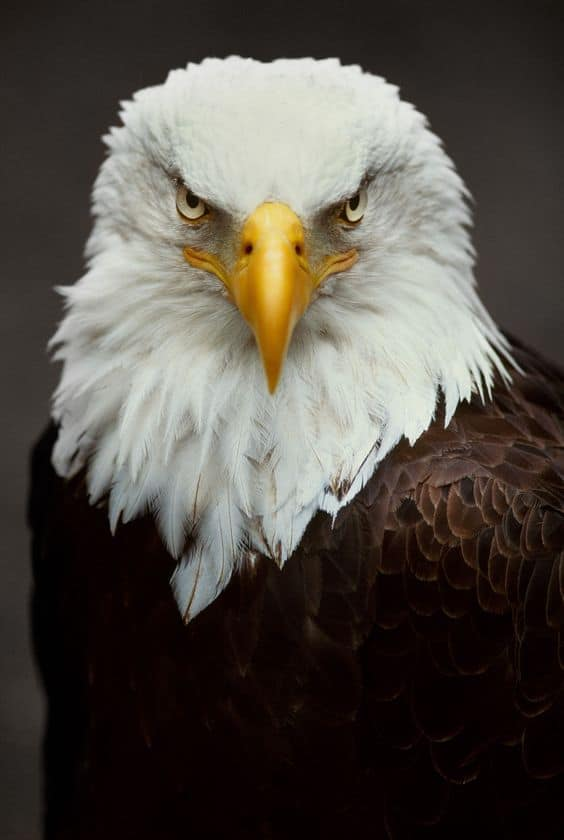 Who is the national bird of the USA?