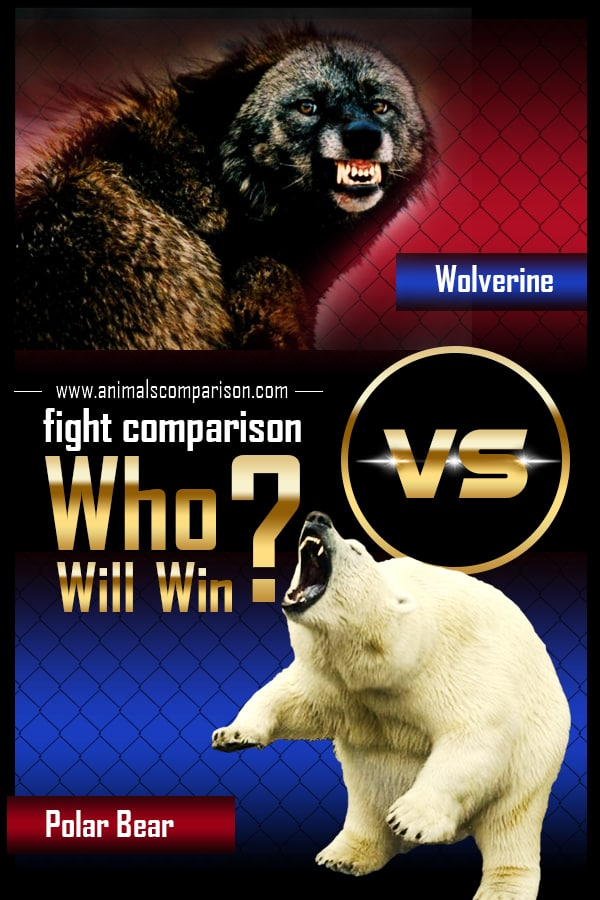 Wolverine Vs Polar Bear