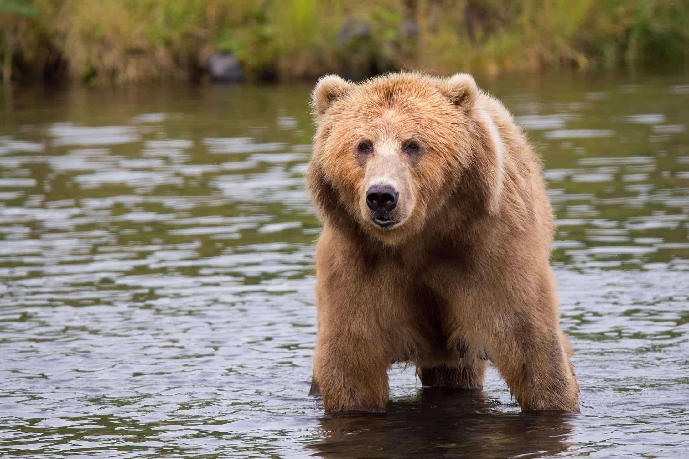 what-do-bears-eat