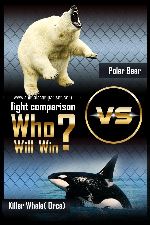 Polar Bear Vs Orca Killer Whale