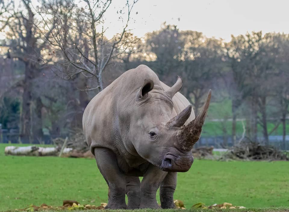 What is the size, weight, height, length of Rhino?