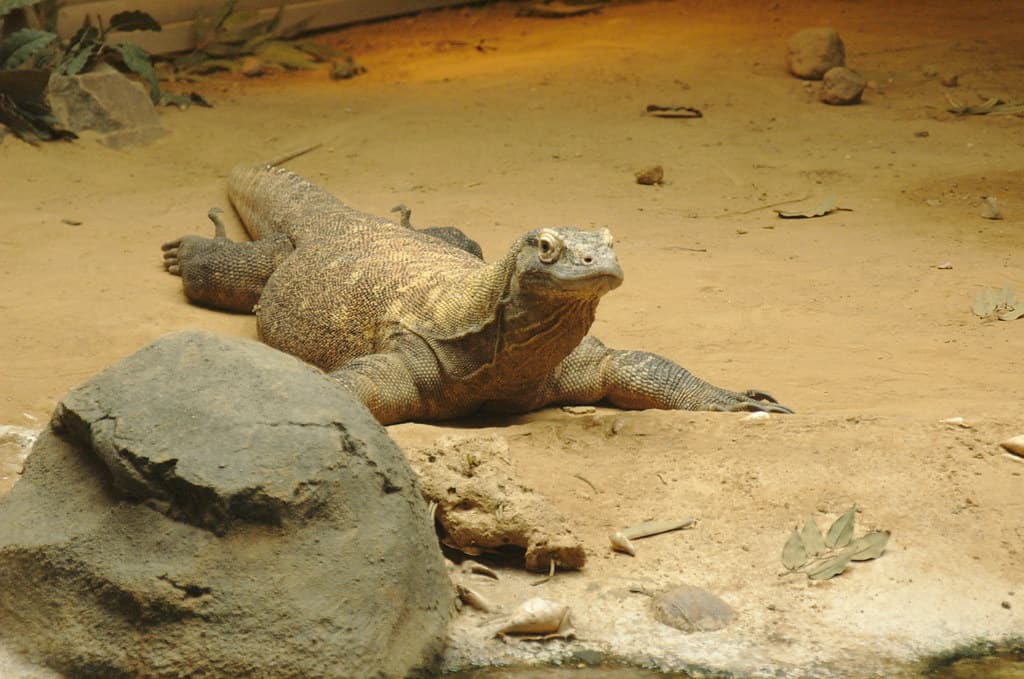 Where does Komodo Dragon live?