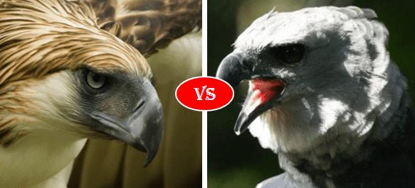Philippine eagle vs harpy eagle