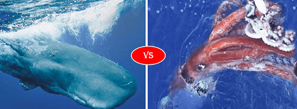 sperm whale vs squid Colossal