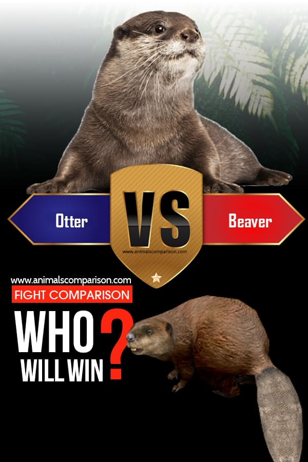 Beaver vs Otter vs Muskrat