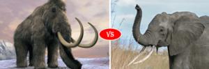 elephant vs mommoth