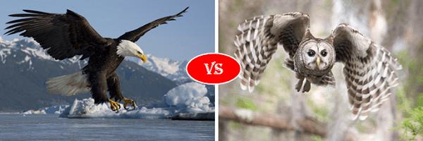eagle vs owl