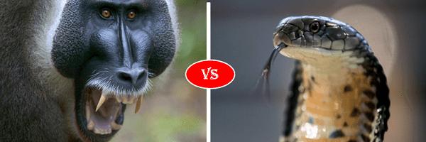 monkey vs snake