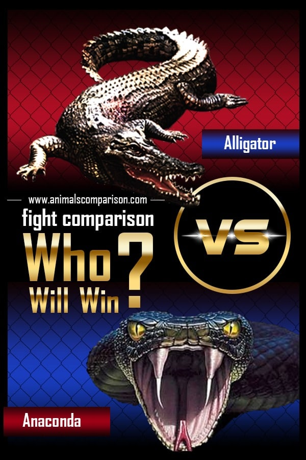 Alligator Vs Anaconda