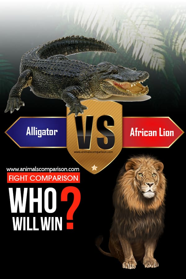 Alligator vs African Lion?