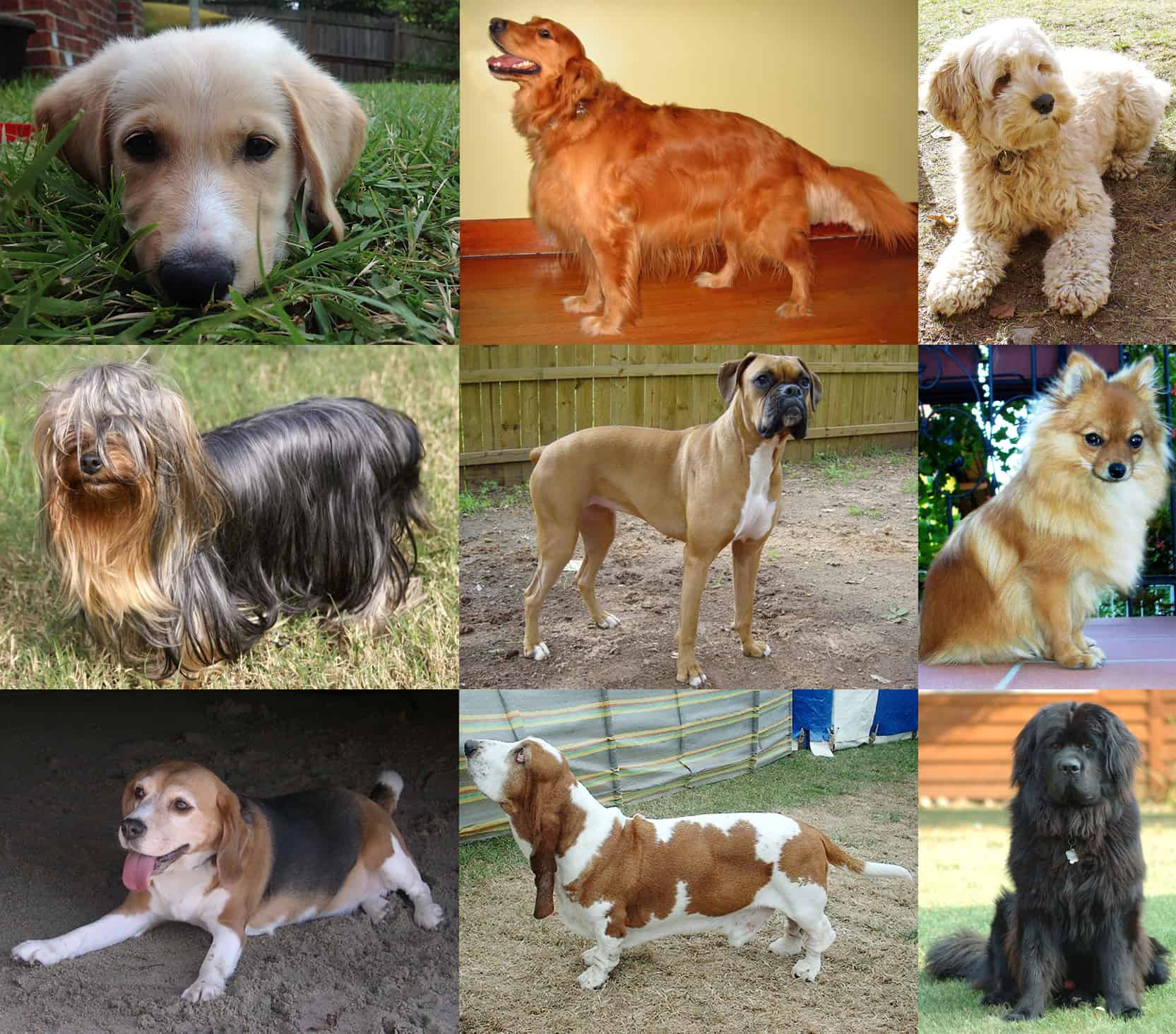 How many types of dogs breed are there?