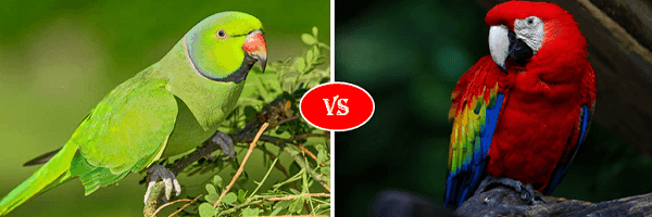 parrot vs macaw