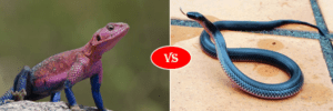 snake vs lizard