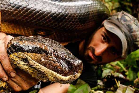 Anaconda can kill a human