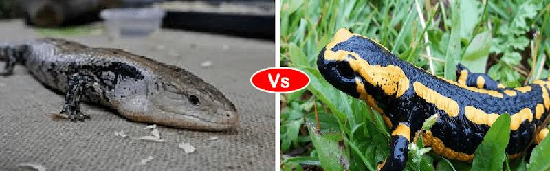 Skink vs salamander