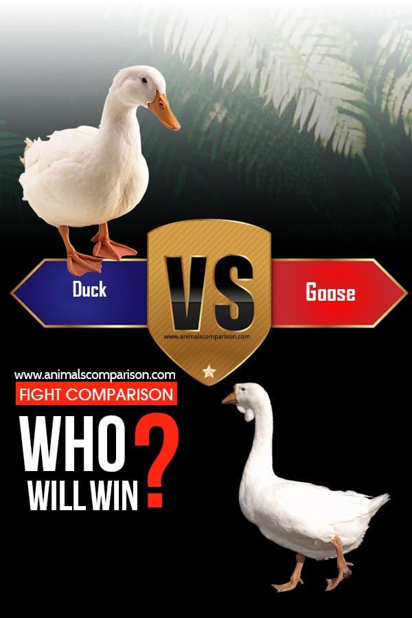 Duck vs Goose