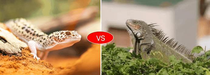 Gecko vs Iguana vs Lizard