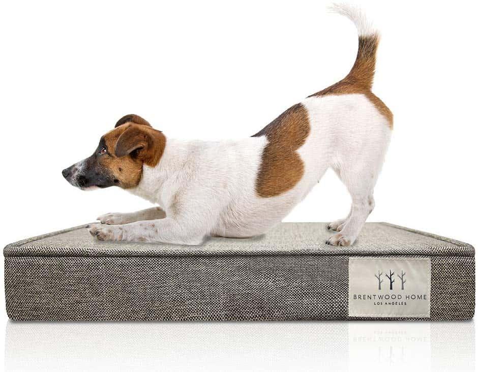 best Labrador or large dog beds