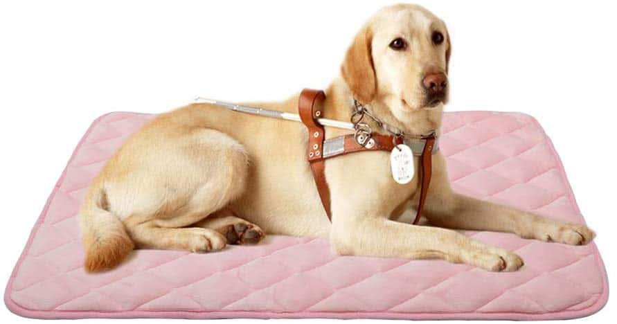 Best Labrador and large dogs beds and pads