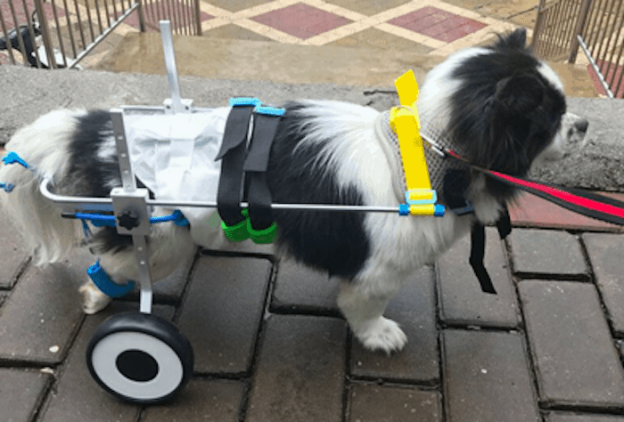 best Stroller for disabled dogs