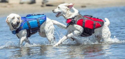 Best dog life jacket 2020