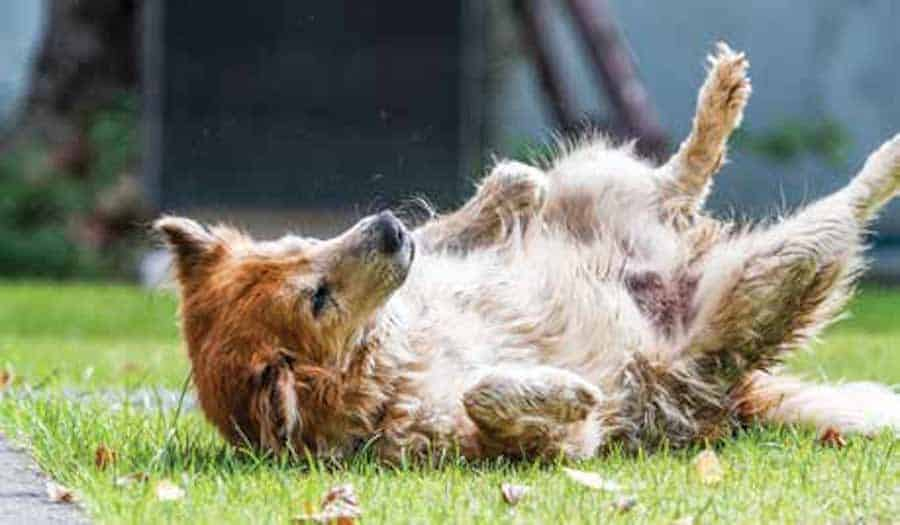 seizures in dogs treatment