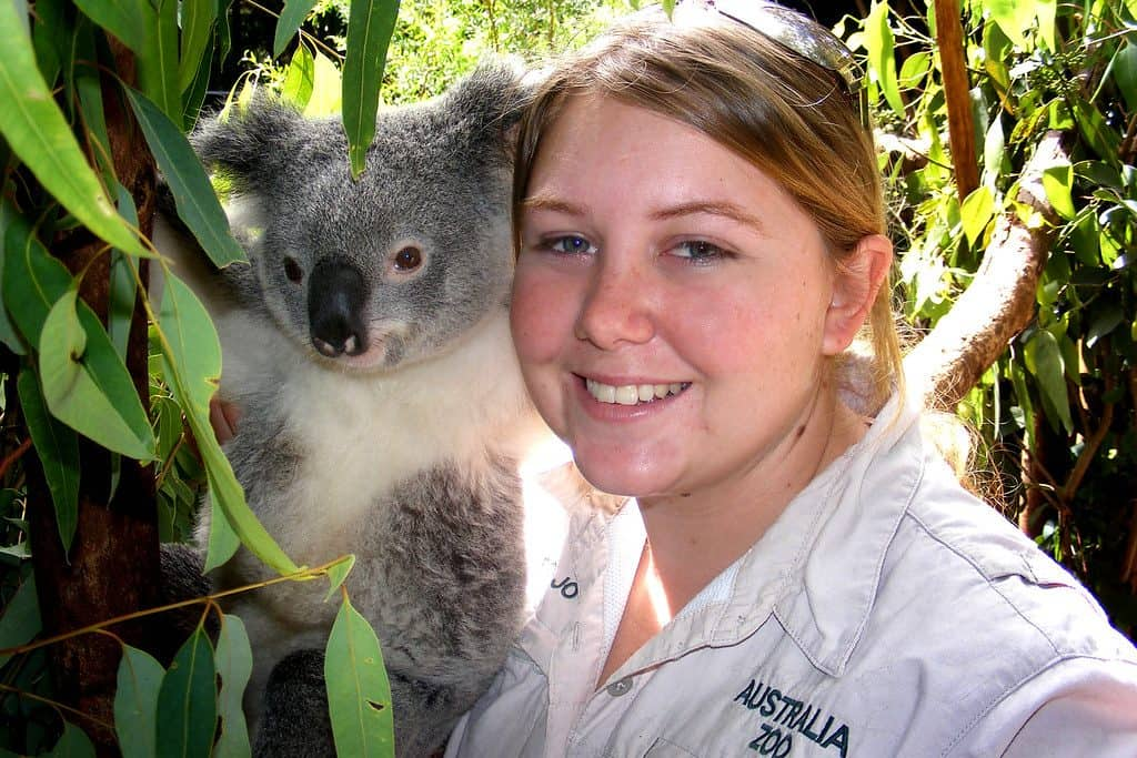 Do Koalas love to be around humans?