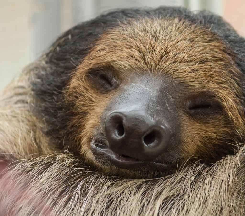How Long sloth sleep in a day?
