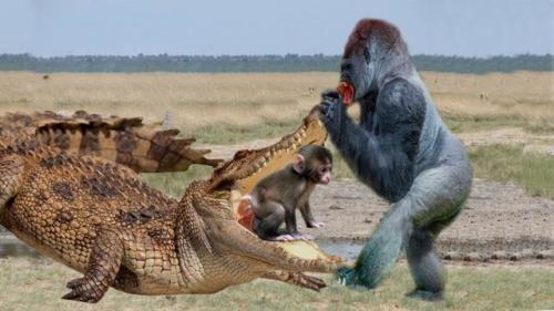 monkey attacking crocodile