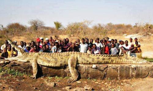 tallest crocodile ever